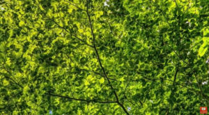 les arbres parlent entre eux